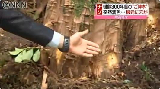 ご神木-不自然な穴